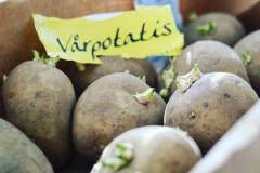 Förgro potatis