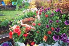 Blommor installation